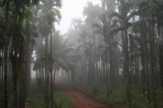 Vihangama Holiday Retreat: Plantation inside the resort