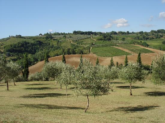 Pietrafitta Podere La Costa: the olive grove