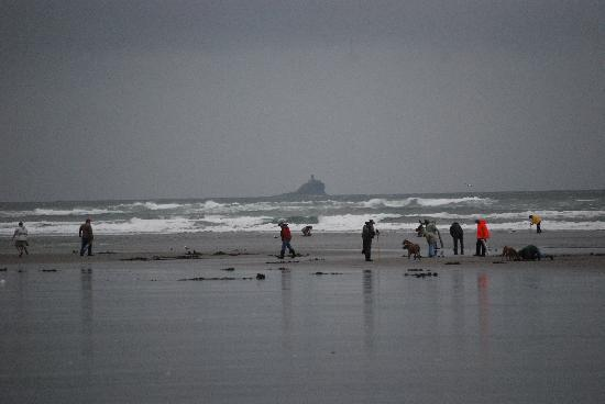 Seaside, OR: razor clamming 4-10