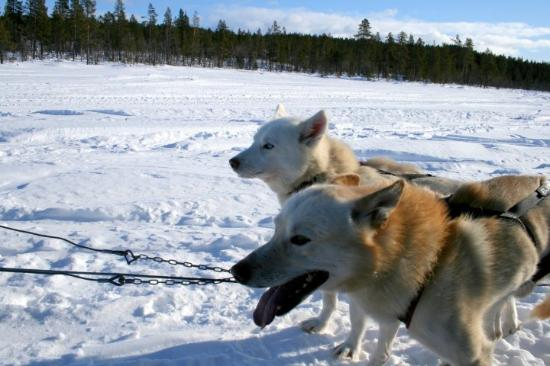 Kiruna, Suécia: Tiếng gọi nơi hoang dã :)