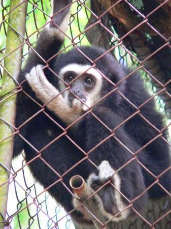 Phang Nga, Thailand: GibbonRehabilitationProject