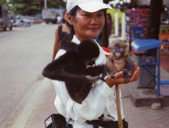 Phang Nga, Thailand: affenzirkus/affenschande