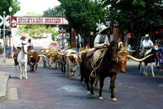 Fort Worth Stockyards National Historic District: FortWorth, TX  cattle Drive
