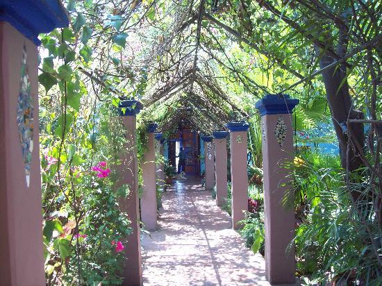 Casa Colonial: Long trellis the length of the garden