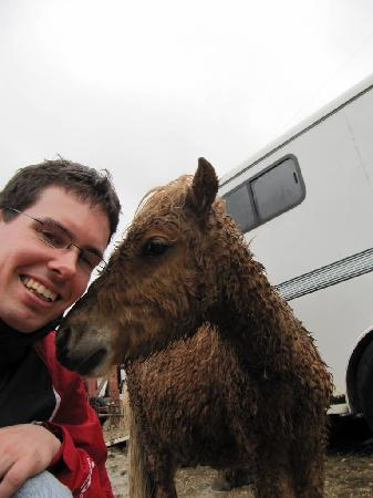 The Farmyard: Baby Horse wanted to play