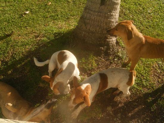 Taumesina Hideaway: The dogs!