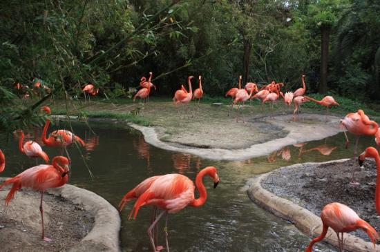 Zoo Picture Of Riverbanks Zoo And Botanical Garden Columbia Tripadvisor