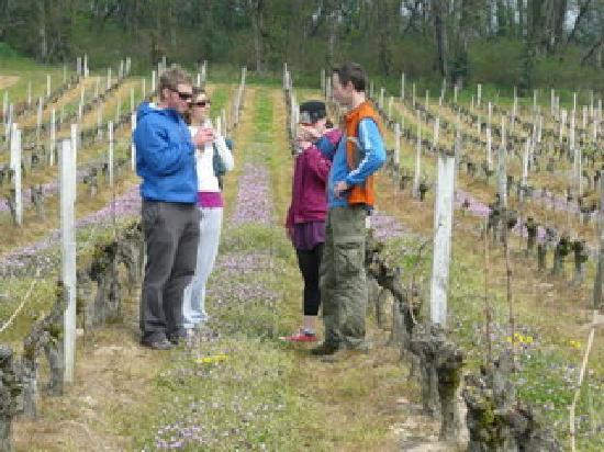 Le Tasting Room Wine - Day Tours: Enjoying a glass of wine amongst the vines in Saumur Champigny
