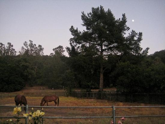 Kenwood Oaks Guest House : Evening View from Guest House