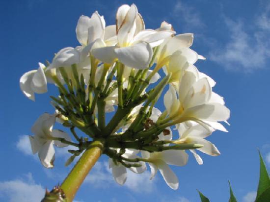 La Fleur De Monoi Picture Of La Villa Sonada Matanzas Tripadvisor