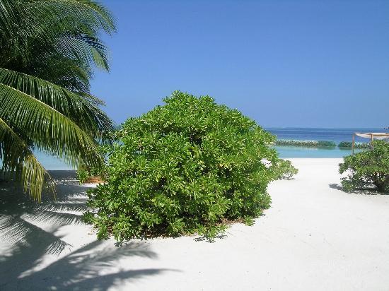 Lily Beach Resort & Spa: natura verde e azzurro