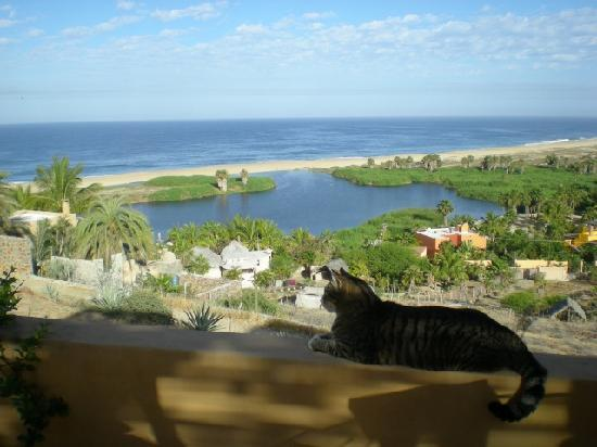 """Los Colibris Casitas: """"Cinco"""" enjoys the  terrace perch at Casita La Chucha"""
