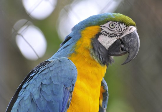 Zoo de Guyane: Birds on display
