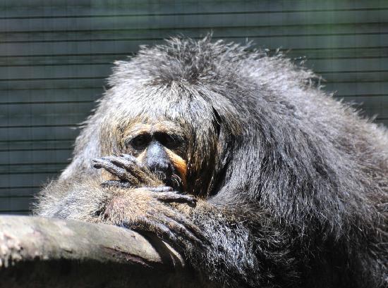 Zoo de Guyane: Sad looking fella