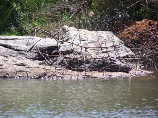 Mysuru (Mysore), India: Crocodile...we were in a little row boat...glad he was sleeping