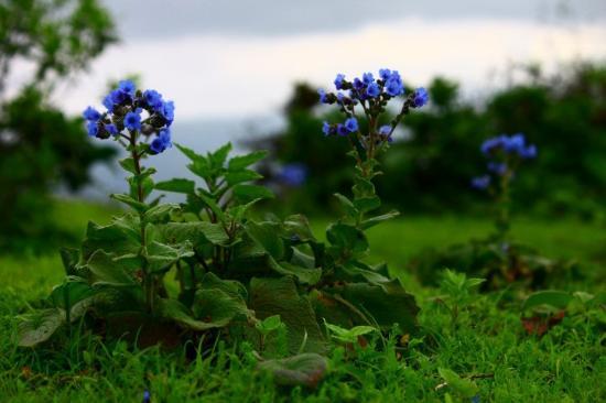 Satara Photo