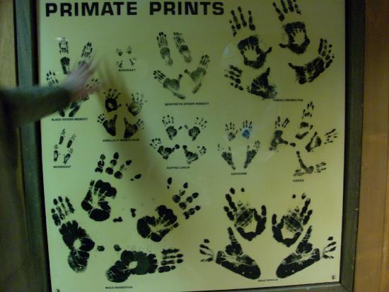 Henry Doorly Zoo: primate prints