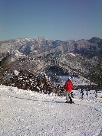 Shimaya Ryokan: Skiing near Yudanaka
