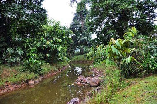 Hacienda La Isla Lodge: der teich in der parkanlage