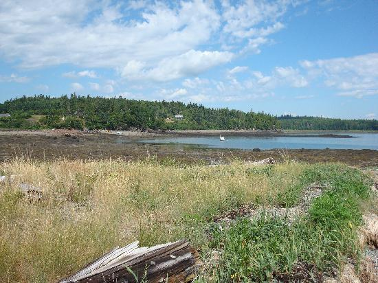 Cobscook Bay Cottages: the view of the bay from Seawall Cabin