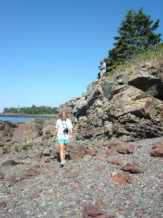 Cobscook Bay Cottages: Out toward the point, an easy hike from our cabin