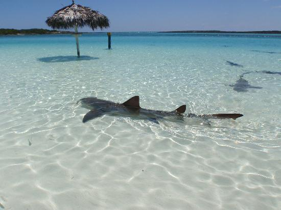 Powerboat Adventures: shark!