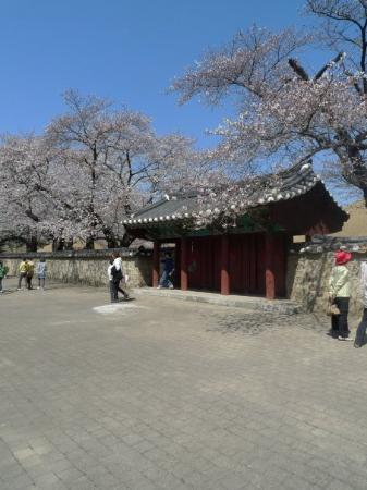 Gyeongju Photo