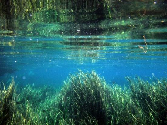 Wakulla Springs, FL: Underwater Jungle