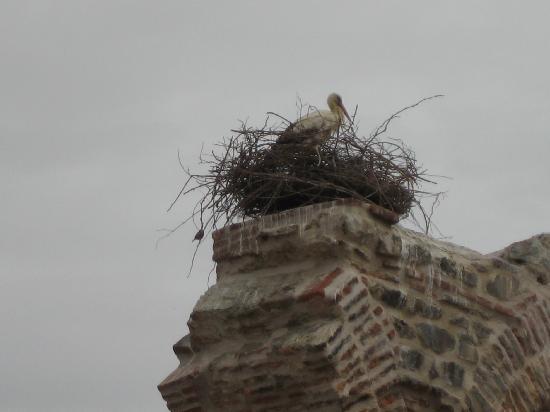 يوركميز هوتل: Stork nesting