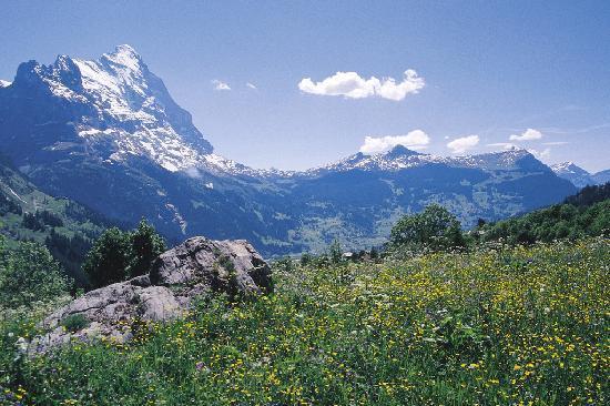 Belvedere Swiss Quality Hotel: Summer in Grindelwald