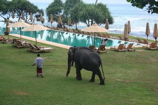 The Fortress: Elephant in the hotel!