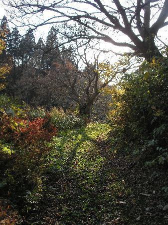 Asamushi Onsen Forest Park : trail