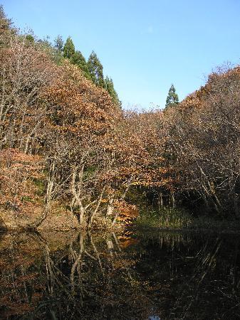 Asamushi Onsen Forest Park : hidden pond