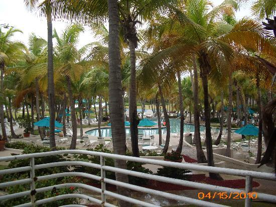 Hilton Ponce Golf & Casino Resort: View from Room 107 of the pool area