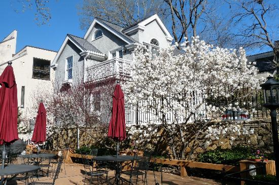 Southmoreland on the Plaza: Blooming magnolia on the back deck
