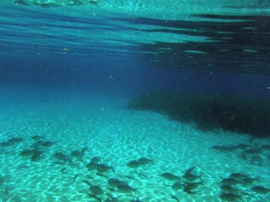 Wakulla Springs, FL: Fish