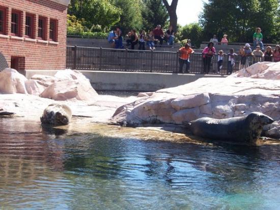 Bilde fra Lincoln Park Zoo