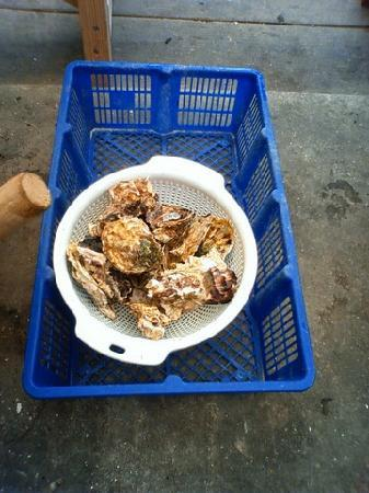 Sasebo, Japon : 九十九島牡蠣