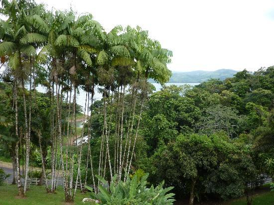 Villa Decary: view of Lake Arenal from our balcony