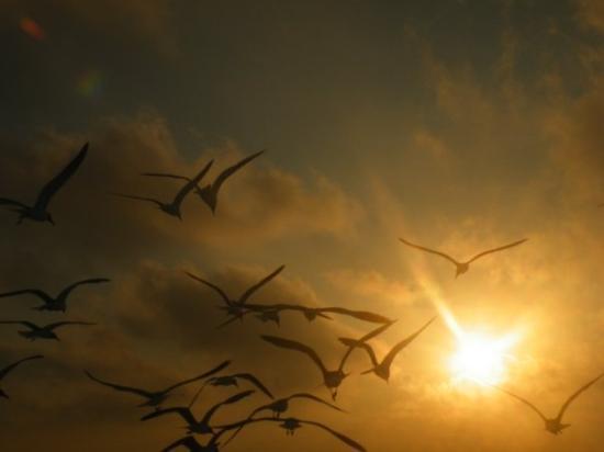 Anna Maria Island, FL: Birds into the sunset