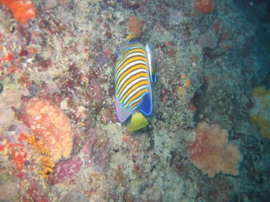 Bilde fra Gau Island
