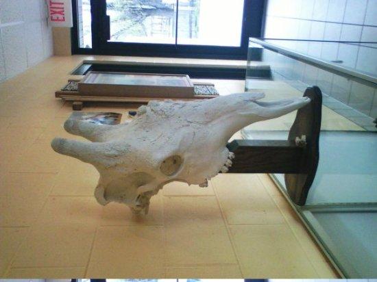 Green Bay, WI : Giraffe Bones