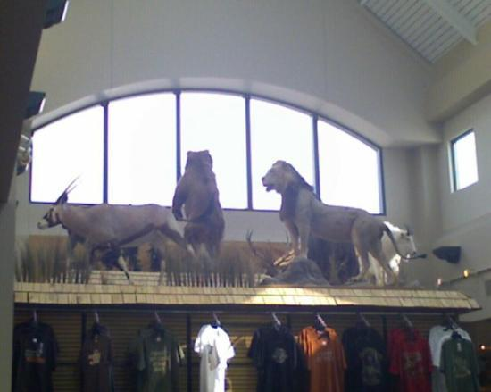 Appleton, WI: Some animals at the mall that looked really lifelike