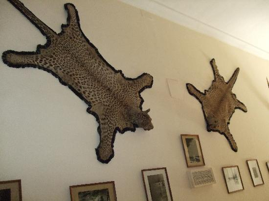 Lalgarh Palace and Museum: Who likes to hunt?