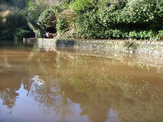 Aquamarine Guest House: pond at cockington village