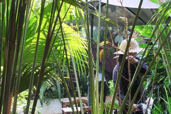 Le Tigre Hotel : The garden