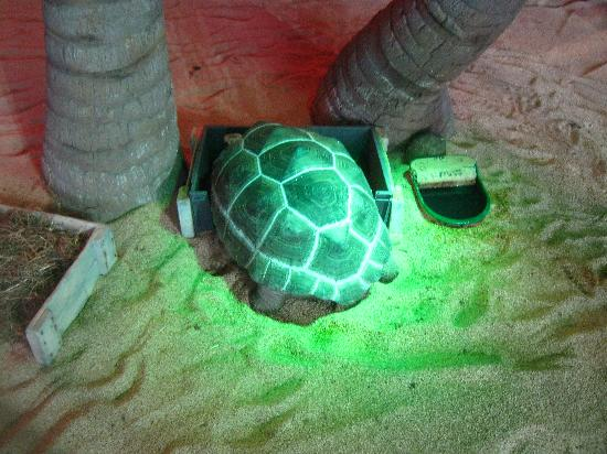 Nausicaa, National Sea Centre: Turtles