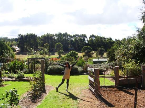 Margaret River, Australia: the lavender farm is so preeeetaayyy!!