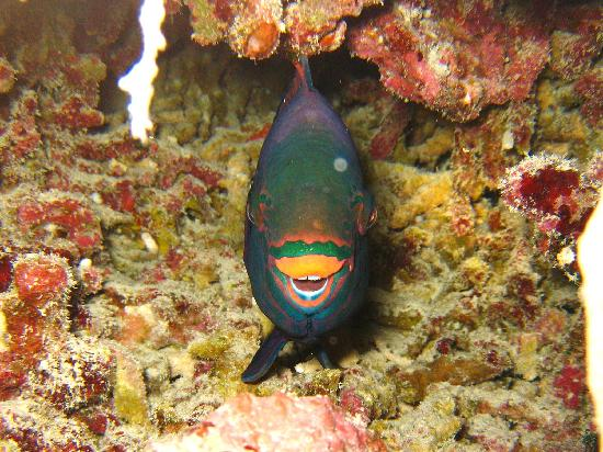 Los Cabos Deep Blue: Let Oscar show you one of these at night, they do something really weird.