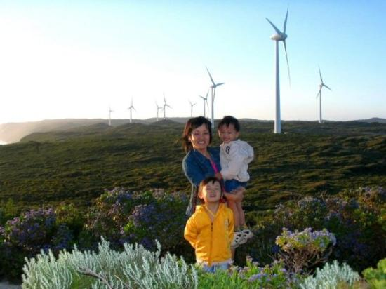 Albany, Australien: 海岸的风车群构成一幅很有魅力的景色。